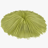 mushroom coral 3d max