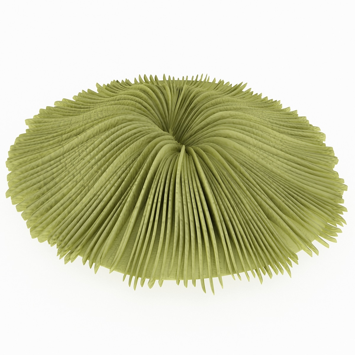 134535_Mushroom_Coral_2_005.jpg