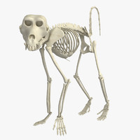 3d skeleton monkey model