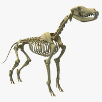 3ds max dog skeleton