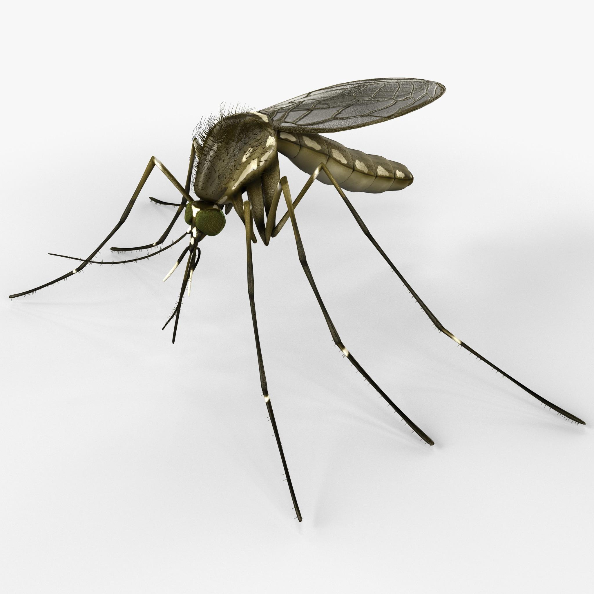 Mosquito_2.jpg