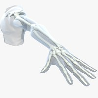 maya skeleton upper limb