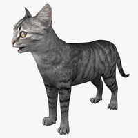 cat 3 rigged 3d model