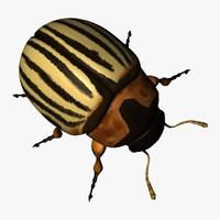 leptinotarsa decemlineata beetle c4d