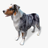 Real-Time Dog Australian Shepard