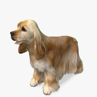 Cocker Spaniel 3D models