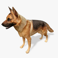Real-Time Dog German Shepard