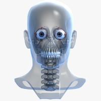 3d skull anatomy model