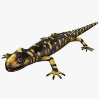 tiger salamander c4d