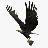 3d bald eagle salmon
