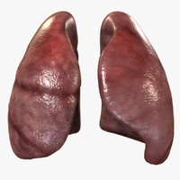 3d human lungs model