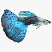 3d model blue guppy