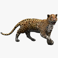 Jaguar Pose 2