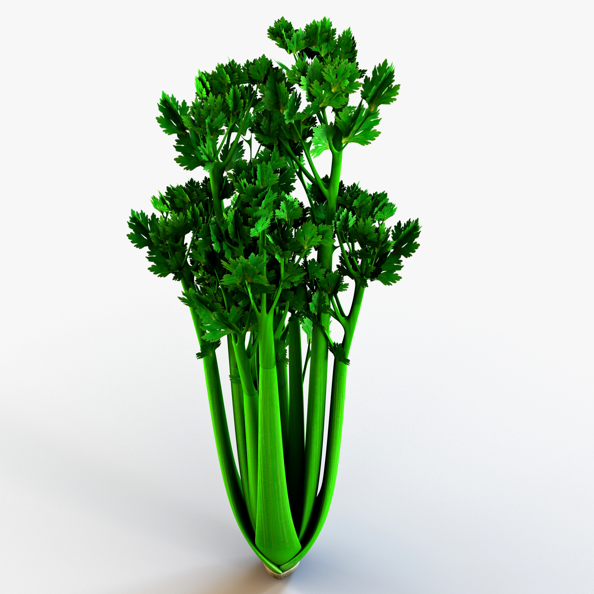 Celery_149.jpg