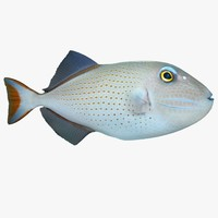sargassum triggerfish 3d model