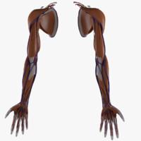 3d model upper limb