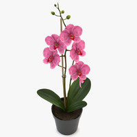 3d model orchid pink