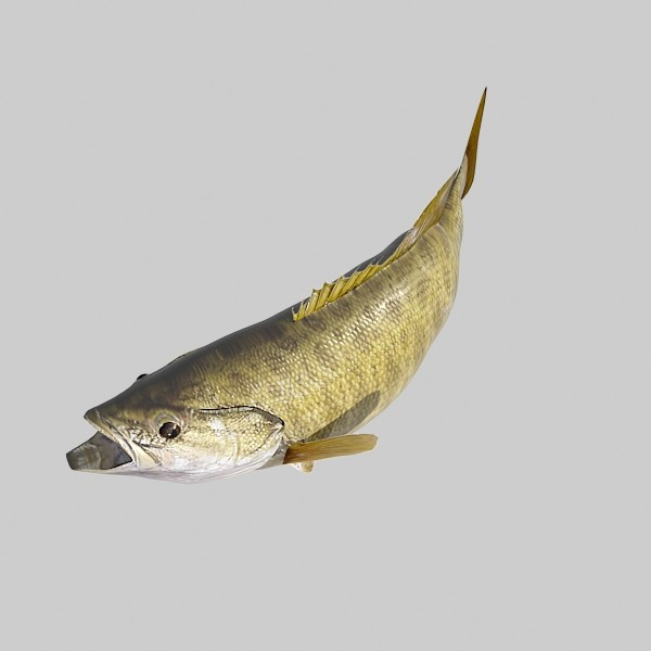 3d model fishing pole smallmouth bass for Bass fishing 3d