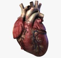 human heart 3d obj
