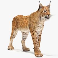 lynx cat 3d max