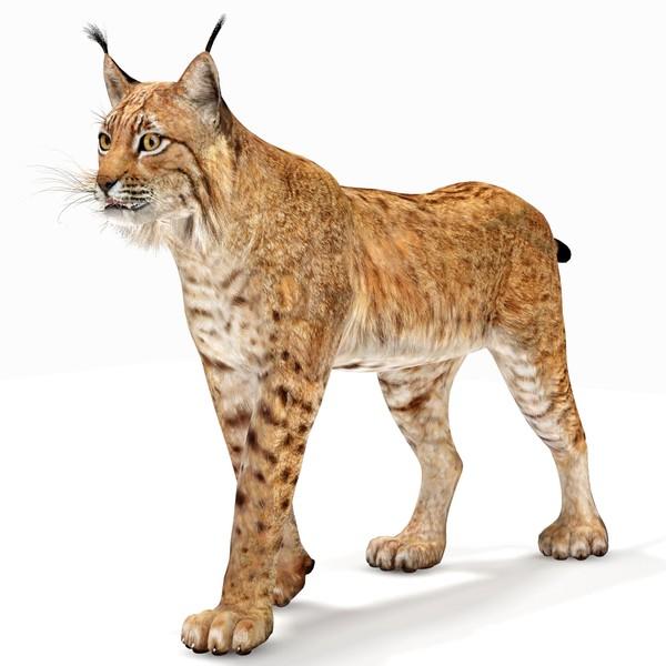 3d Lynx Cat