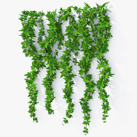 Wall Hanging Plant Ivy K model