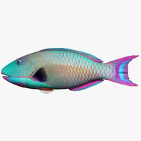 bicolor parrotfish 3d model