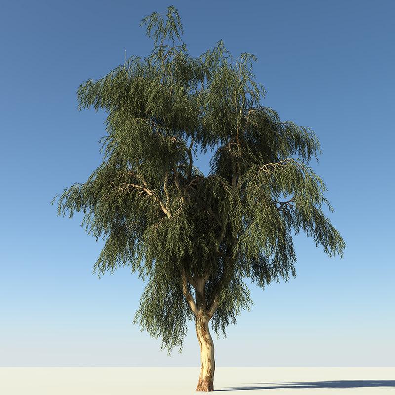 3d model eucalyptus tree. Black Bedroom Furniture Sets. Home Design Ideas