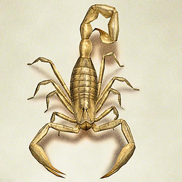scorpion00.jpg