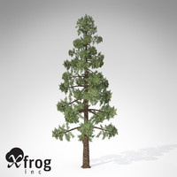 wollemi pine tree 3d model