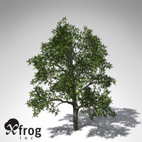 xfrogplants breadfruit tree 3d model