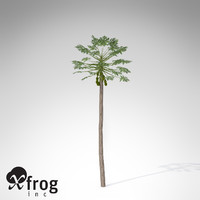 XfrogPlants Papaya plant