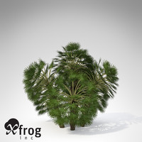 mediterranean fan palm plant 3d model
