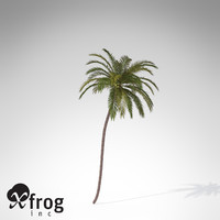 coconut palm tropical plant 3d model