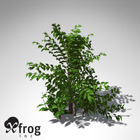 xfrogplants tree coffee tropical plant 3ds
