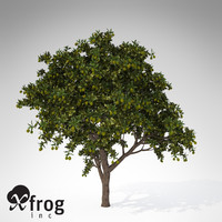 XfrogPlants Mango tree