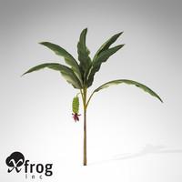 banana plant x 3d model