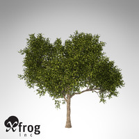 xfrogplants avocado tree tropical plant 3ds