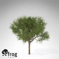 strawberry guava tree 3d model