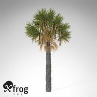 XfrogPlants Palmetto