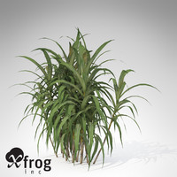 XfrogPlants Sugar Cane
