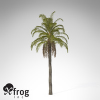 queen palm tropical plant 3d model