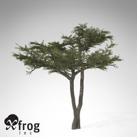 3d xfrogplants umbrella acacia tree