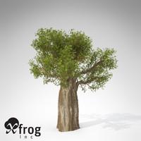 XfrogPlants Baobab