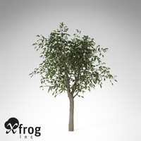 3d model xfrogplants river wild pear