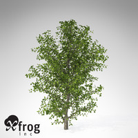 3d model xfrogplants kei apple tree