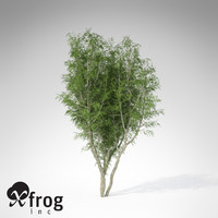 3ds max xfrogplants african mahogany tree