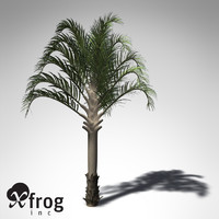 3d model xfrogplants triangle palm