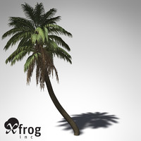 XfrogPlants Senegal Date Palm
