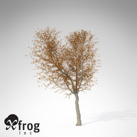 3d xfrogplants autumn norway maple model